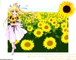 Air Anime Wallpaper # 9